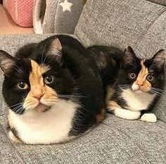 Lovely Cat Online (@lovelycatonline) | Instagram photos videos