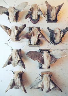 By Mister-Finch: Moth Collection Made From Fake Furs,Velvets and Worn Cottons. I suddenly want a large moth for my wall! Textile Sculpture, Textile Fiber Art, Textile Artists, Soft Sculpture, Mister Finch, Insect Art, Aprons Vintage, Dress Vintage, Weird And Wonderful