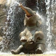 Google 이미지 검색결과: http://3.bp.blogspot.com/_RASREVBMpMQ/S6z7p52NYRI/AAAAAAAADp0/eZVmz7x4zzQ/s1600/elephant.jpg
