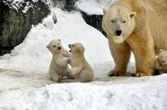 Imágenes Bonitas Animales - Vol.10 (22 Fotos)