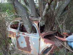 With all polution all plants and trees seems to grow more rapidly, so plse be aware where to park your car, to not find it back like this owner....