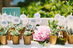 potted succulent escort cards // rebecca arthurs photography
