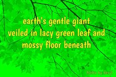 The Tree Haiku by Beryl