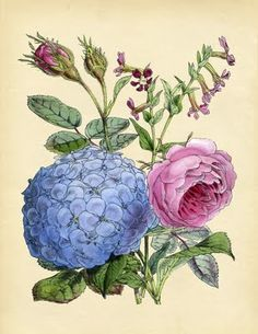 Instant Art Printable - Hydrangea & Rose - The Graphics Fairy