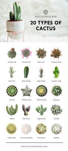 cactus plants types of, faux cactus plants, c. cactus plants types of, faux cactus plants, c. Types Of Cactus Plants, Cacti And Succulents, Planting Succulents, Planting Flowers, Cactus Types Names, Kinds Of Cactus, Indoor Cactus Types, Indoor Cactus Garden, Cactus Garden Ideas
