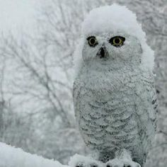 Rain, shine or snow, ClubLocal Service Pros are here to help! #clublocal #owl #snow