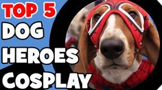 Check out the Top 5 dog heroes cosplay!   To get the newest videos please hit subscribe!   5 - HULK DOG 4 - BATMAN DOG 3 - SUPERMAN DOG 2 - SPIDERMAN DOG 1 - CAPTAIN AMERICA DOG  If you liked this video please hit subscribe and let's join us for more interesting fiveish lists!  Biggest foods ever: https://youtu.be/Elc95cOiVrY World's tallest buildings: https://youtu.be/FWfIwrNlps8 50 years old technologies: https://youtu.be/frxHhuliIow Most expensive guitars: https://youtu.be/LhM2ZBCsqGU Top…
