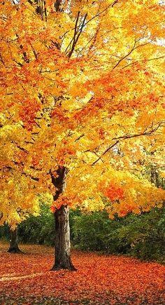 fall colors...