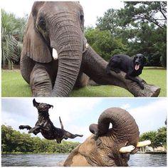 Animal besties!! <3 So cute!