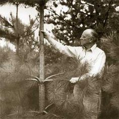 """Aldo Leopold immortalized the prairie in his quote: """"What a thousand acres of Silphiums looked like when they tickled the bellies of the buffalo is a question never again to be answered, and perhaps not even asked.""""  (Not this image; just quote)"""