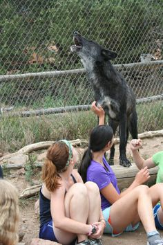 Mission: Wolf in Westcliff, Colorado lets you get up close and personal with wolves for free. Wild Animal Sanctuary Colorado, Westcliffe Colorado, Colorado Trip, All Family, Small Towns, Wolves, Animal Rescue, Wordpress, Southern