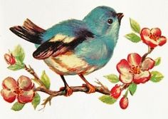 Vintage Bird Postcards ~ Miscellaneous Seasons bluebird
