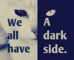 Image via We Heart It #black #cats #dark #side #white