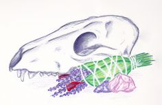 Fox skull with smudge stick and crystals illustration by arkolina
