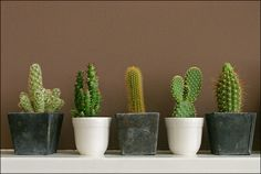 Hold your horse, cowboy! Op zoek naar uniek stukje woestijn in Nederland én een zinnenprikkelende ervaring? Ga dan eens naar de wild wild Achterhoek. In de CactusOase te Ruurlo kun je namelijk ronddwalen over een zandvlakte van maar liefst 6000 m2 met duizenden cactussen in alle soorten maten, vormen en kleuren. Een stortvloed aan cactussen dus!