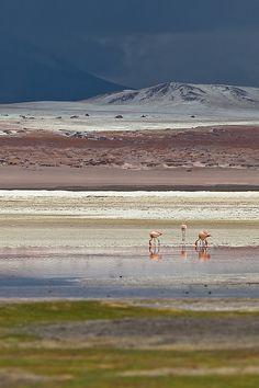 Flamingos at Laguna Colorada, Bolivia, by Joerg Bonner