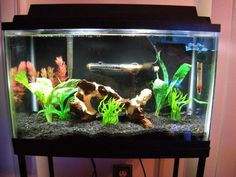 Freshwater Aquarium Design Ideas 1 Find This Pin And More On Freshwater Aquariums Advices Fish Tank Decoration Ideas
