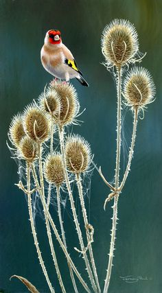 Teasels and Goldfinch   Jeremy Paul - Wildlife Artist