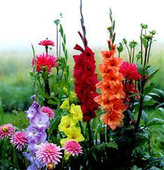 Derek Fell photo of flowers in Monet's garden at Giverny France.