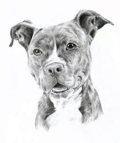 drawing pit bulls | Pitbull by oOChErRyThEbErRyOo