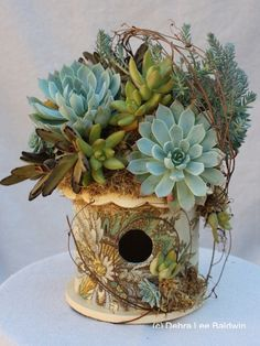 Succulents on Birdho