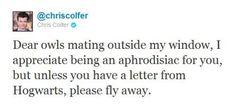 Dear owls mating outside my window...