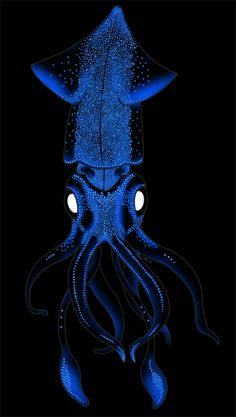 (Watasenia scintillans) Known as the sparkling enope squid or firefly squid. Beautiful Sea Creatures, Deep Sea Creatures, Deep Sea Animals, Underwater Creatures, Underwater Life, Sea And Ocean, Sea World, Ocean Life, Marine Life