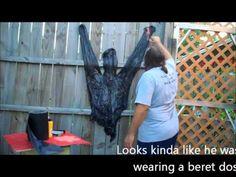 Human pelt tutorial - YouTube Hmm, that sounds weird if you're not a Halloween haunter.