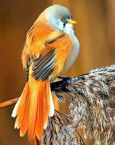 Birds In The Sky, All Birds, Little Birds, Love Birds, Pretty Birds, Beautiful Birds, Animals Beautiful, Exotic Birds, Colorful Birds