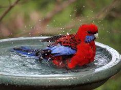 How to paint a concrete bird bath