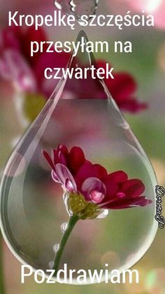 Wine Decanter, Beautiful Roses, Education, Pictures, Thursday, Disney, Funny, Fotografia, Good Morning