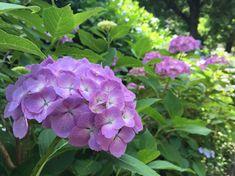 Kávézacc a kertben? 4 módon is felhasználhatjuk! Hydrangea, Garden, Plants