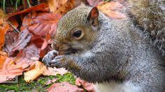 squirrel by Vidislava Ⓥ Todorova on Squirrel, My Photos, Rabbit, Autumn, Animals, Bunny, Rabbits, Animales, Fall Season