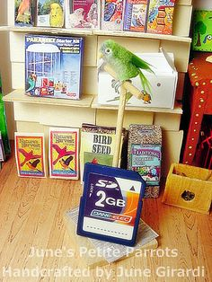 OOAK Dollhouse Miniature Bird Handcrafted Quaker Parrot (Made to Order)