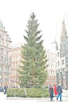 Oh Vienna! So naturally beautiful.
