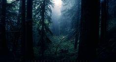 Free computer dark forest image, West Birds 2016-01-20