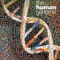Highlights include an interactive timeline of the human genome, a virtual tour of the Smithsonian's Genome exhibit, 3D imagery and video. Resources are available for teachers from genetics organizations worldwide. Students are able to explore jobs in the field via the Genomic Career Resource tool.