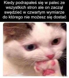 Russian Jokes, Funny Moments, Funny Photos, Lol, In This Moment, Cats, Animals, Smile, Vegan