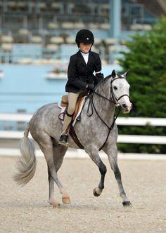 the perfect pony.