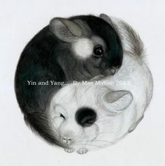 ''Yin & Yang Chinchillas'' by Mae Mahon 2013. Coloured pencil drawing The true balance of Life. Prints available, just get in touch @: thechinchillaartist @ gmail.com (Without spaces!) Love. Mae