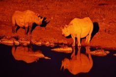 Okaukuejo Camp(NWR)   Etosha National Park in Namibia