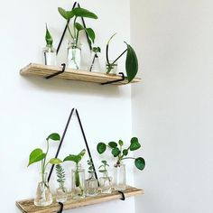 Propagation Station has doubled . Plants Grown In Water, Water Plants, Garden Plants, Indoor Plants, House Plants Decor, Plant Decor, Plants In Bottles, Decoration Plante, Plant Aesthetic