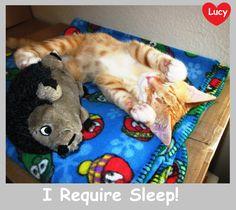 Sleep is very important!