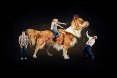 20 weird, funny and very awkward family pet photos: 20 weird, funny and very… Funny Family Portraits, Funny Family Photos, Funny Christmas Photos, Family Christmas Pictures, Family Christmas Cards, Funny Christmas Cards, Christmas Humor, Family Holiday, Xmas Cards