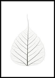 Botanisk poster med blad, fotokonst.