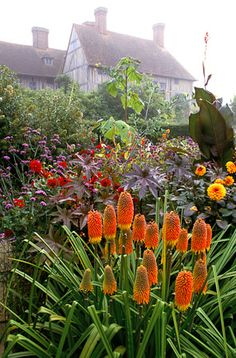 41012 - 01  Looking towards the house from the exotic garden at Great Dixter. Kniphofia linearifolia in the foreground