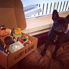 One of our many happy Ruby & Duke #Dukebox dog toy and treat customers. www.rubyandduke.com  #dogsofinstagram #dogstagram #dogs #dogsrule #doglove #doglovers #doglife #dogoftheday #doggy #doglover #doggie #dogscorner #dogofinstagram #dogsofinsta #dogwalk #dog_features #doggies #dogsandpals #dogloversofinstagram #dogdays #dogsofinstaworld #dogcrushdaily #dogslover Dog Walking, Dog Toys, Dog Life, Duke, Doggies, French Bulldog, Dog Lovers, Happy, Instagram Posts