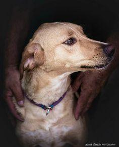 Tus manos - antua blonde photography -  fotógrafo solidario - barcelona - animal - fotos - reportajes - animal de compañía - maresme - cat - gat - gato - dog - gos - perro