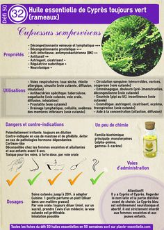 A Beautiful and Short Aromatherapy Guide For ayurveda and essential oils Health And Wellbeing, Health And Nutrition, Essential Oil Diffuser, Essential Oils, Ravintsara, Lotion Recipe, Diy Lotion, Homemade Beauty Products, Medicinal Herbs