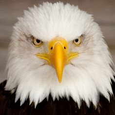 """- Bald Eagle remenber when MOM just gave you """" the look' AND YOU SHAPED RIGHT UP."""